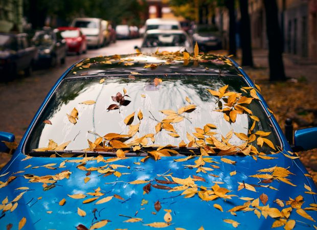 Driving Tips: The Autumn Accord